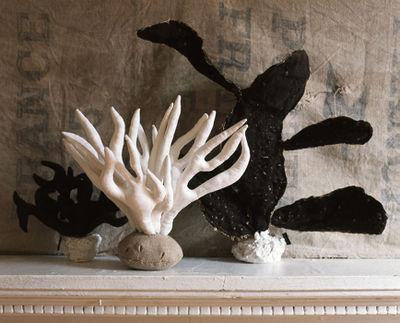 Tamar.M coral